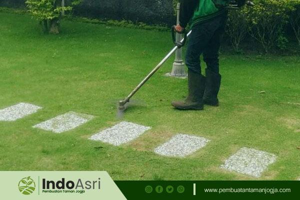 Indo Asri juga menyediakan jasa potong rumput