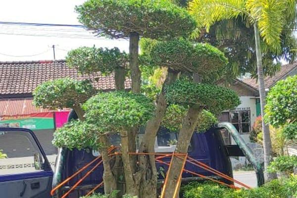 pembuatan taman jogja-taman rumah (11)