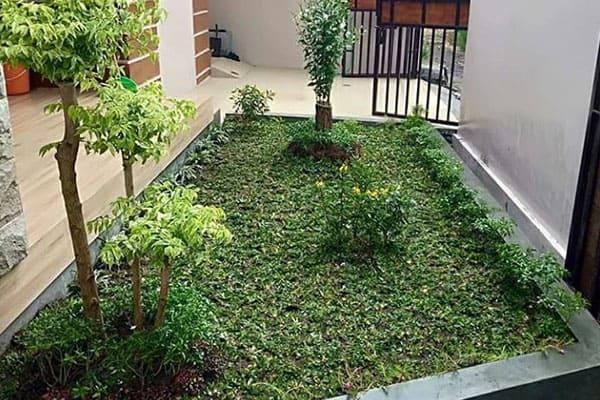 pembuatan taman jogja-taman rumah (4)